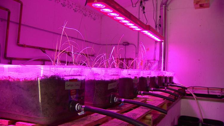 greenhouse-purple-2